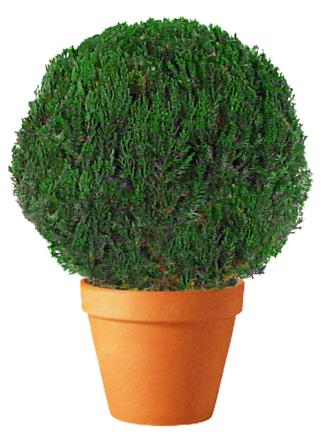Topiary Globe Preserved Juniper 7 Quot 48 Quot Ball Diameter