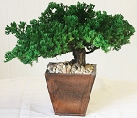 Preserved Bonsai Traditional