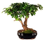 Bonsai Artificial Ficus Tree