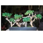 Bonsai Hedge Preserved