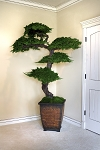 Bonsai Kage Large Preserved Juniper