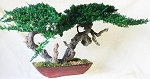 Bonsai Sokan Preserved Juniper