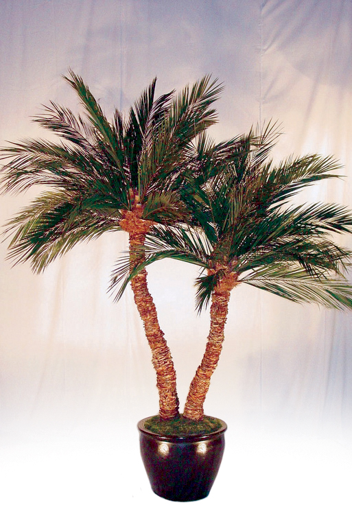 Preserved Palm Double Aloe 6 Ft 12 Ft Tall