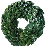Wreath Fresh Magnolia All Green