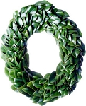 Wreath Fresh Magnolia Oval All Green